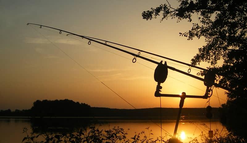Coucher de soleil sur cannes à pêche